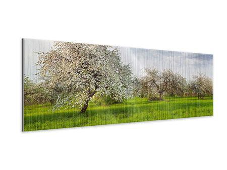 Metallic-Bild Panorama Apfelbaum-Garten
