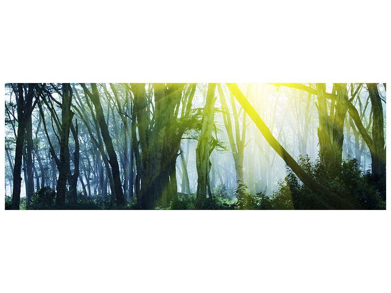 Metallic-Bild Panorama Sonnenstrahlen im Wald