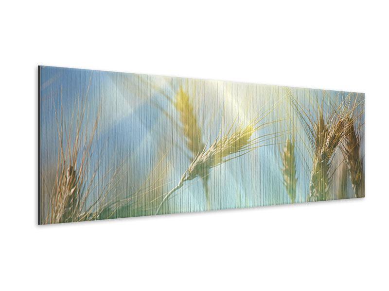 Metallic-Bild Panorama König des Getreides