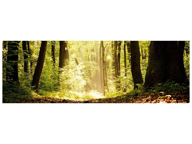 Metallic-Bild Panorama Sonnenaufgang im Wald