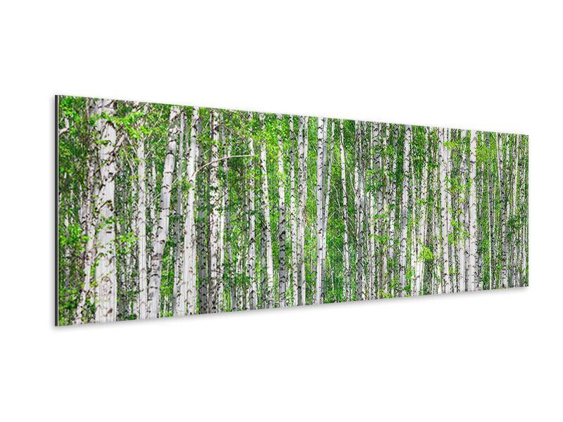 Metallic-Bild Panorama Der Birkenwald