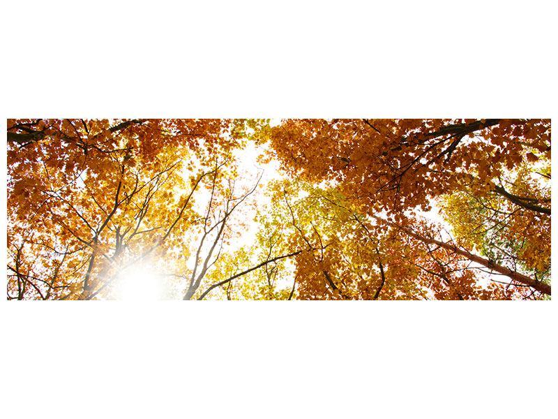 Metallic-Bild Panorama Herbstbäume