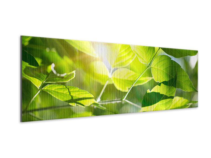 Metallic-Bild Panorama Es grünt so grün