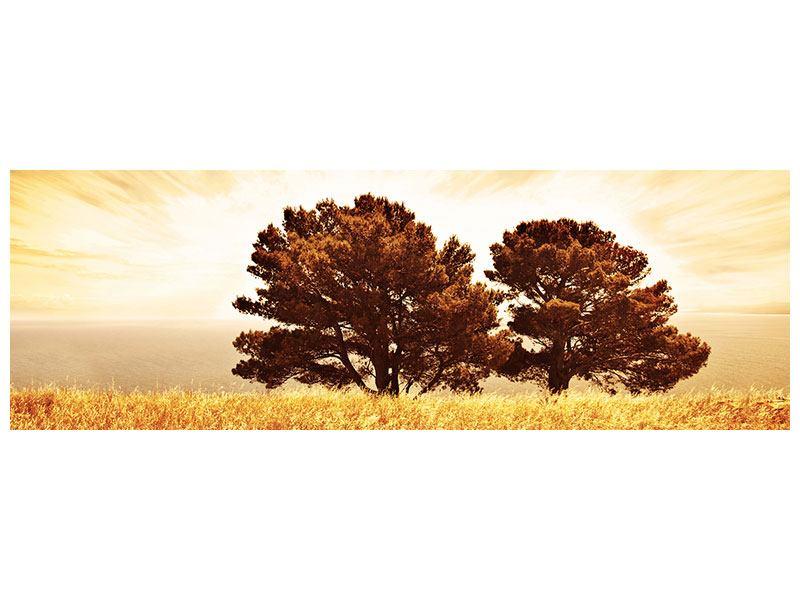 Metallic-Bild Panorama Bäume im Lichtspektakel