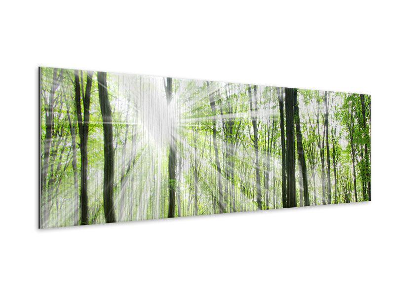 Metallic-Bild Panorama Magisches Licht in den Bäumen