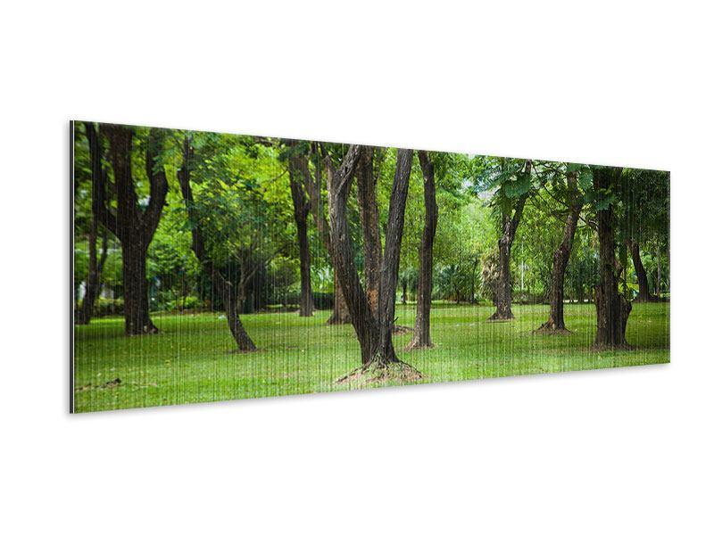 Metallic-Bild Panorama Kirschbaum-Garten