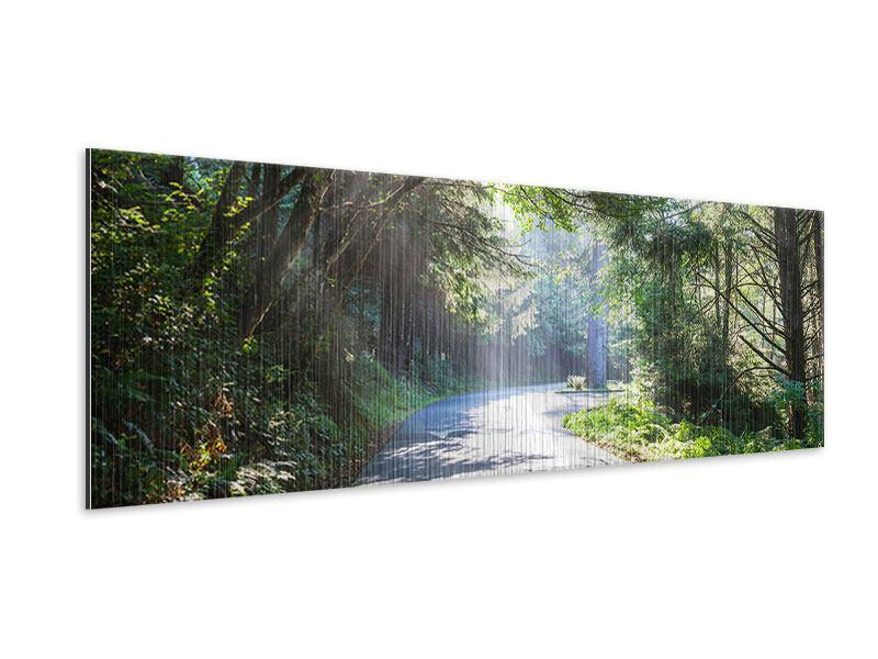 Metallic-Bild Panorama Sonniger Waldweg
