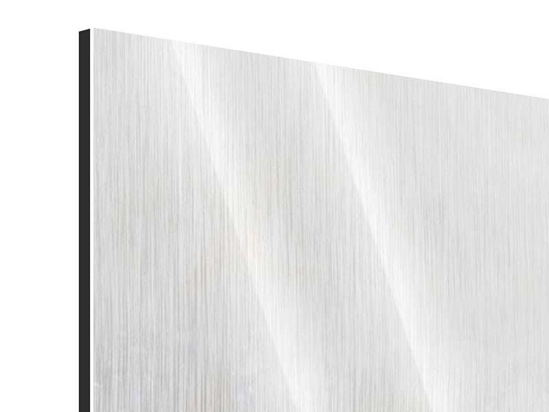 Metallic-Bild Panorama Weisse Rosen im Morgentau