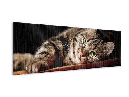 Metallic-Bild Panorama Entspannte Katze