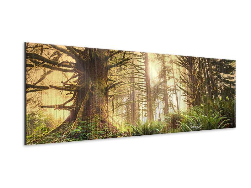 Metallic-Bild Panorama Sonnenuntergang im Dschungel