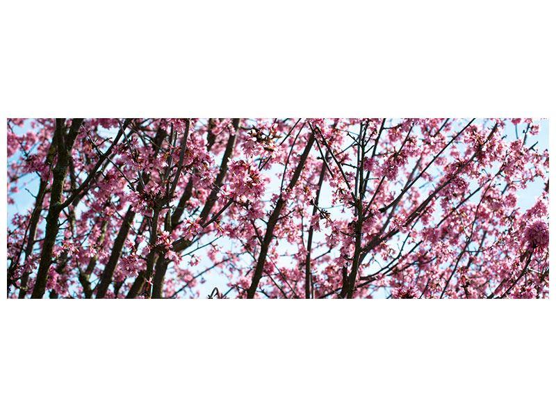 Metallic-Bild Panorama Japanische Blütenkirsche