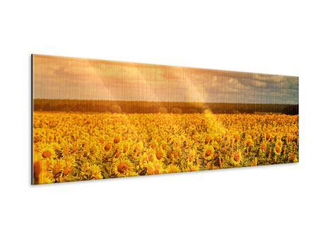 Metallic-Bild Panorama Goldenes Licht für Sonnenblumen