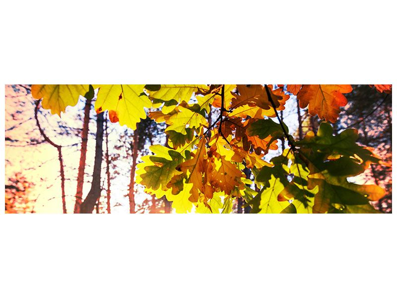Metallic-Bild Panorama Herbst