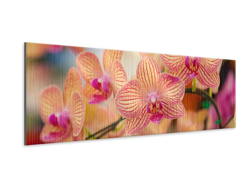 Metallic-Bild Panorama Exotische Orchideen