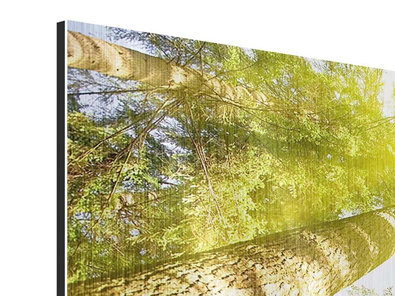 Metallic-Bild Panorama Baumkronen in der Sonne