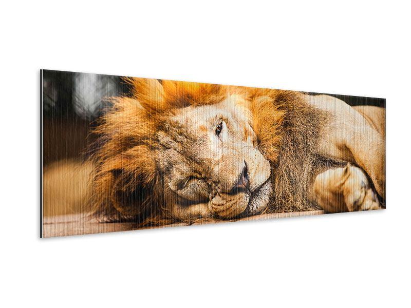Metallic-Bild Panorama Entspannter Löwe