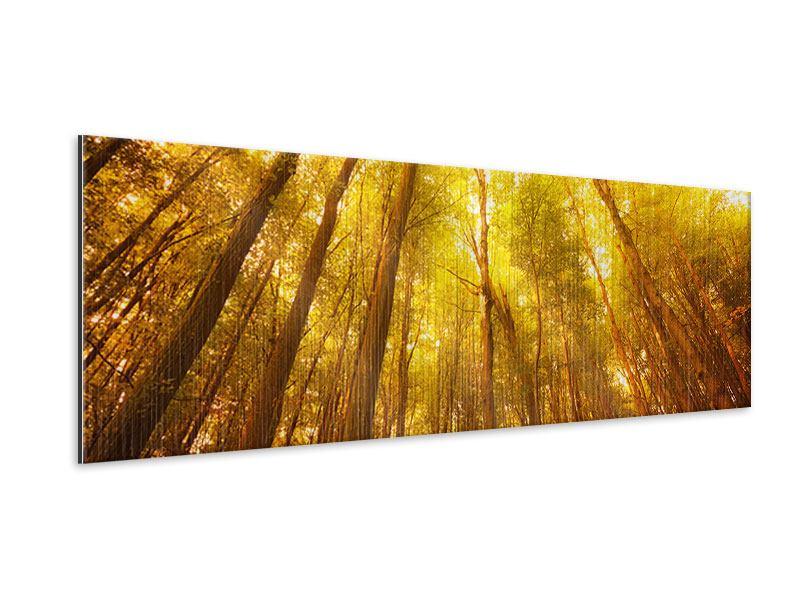 Metallic-Bild Panorama Herbstwald
