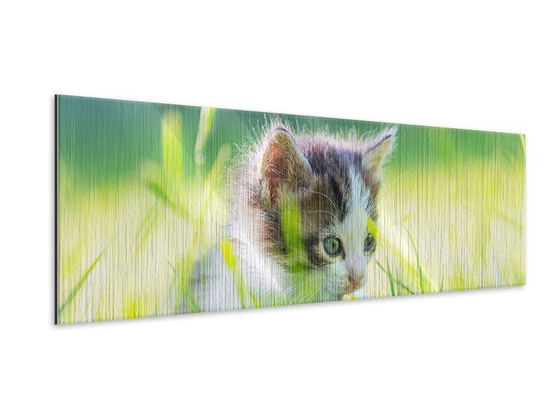 Metallic-Bild Panorama Kitten