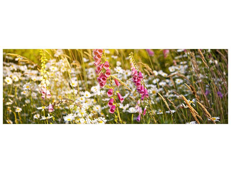 Metallic-Bild Panorama Sommerliche Blumenwiese