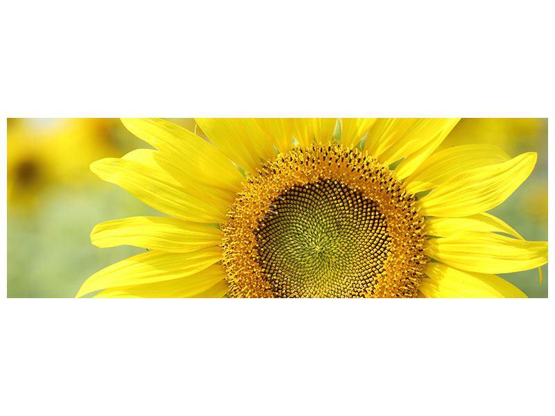 Metallic-Bild Panorama Die Blume der Sonne