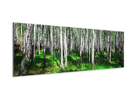 Metallic-Bild Panorama Sommerlicher Birkenwald