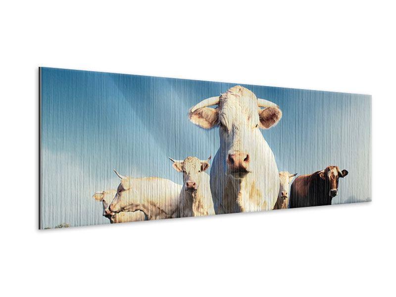 Metallic-Bild Panorama Kühe