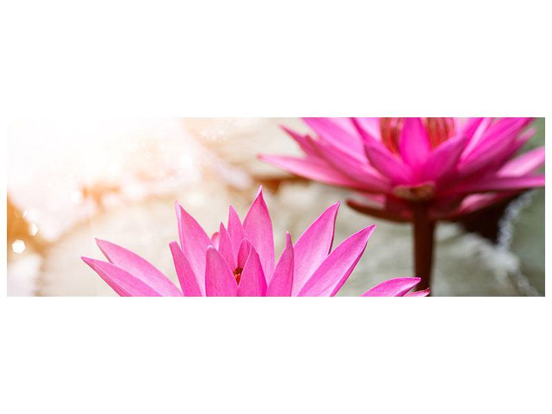 Metallic-Bild Panorama Lotus-Duo