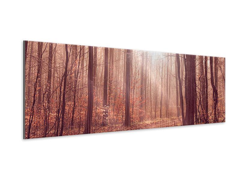 Metallic-Bild Panorama Sonnenuntergang im Herbstwald