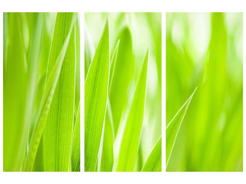 Metallic-Bild 3-teilig Gras XXL