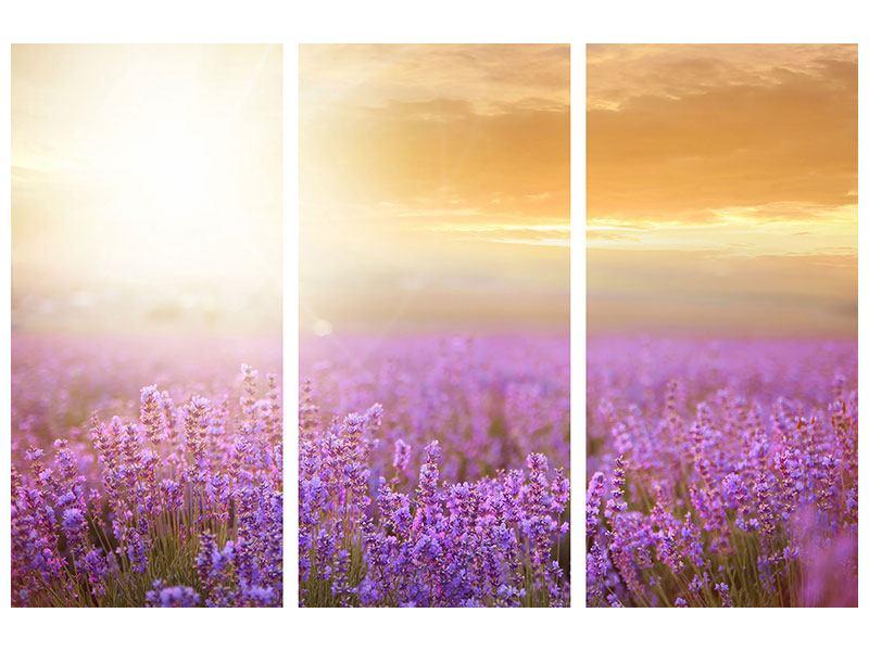 Metallic-Bild 3-teilig Sonnenuntergang beim Lavendelfeld