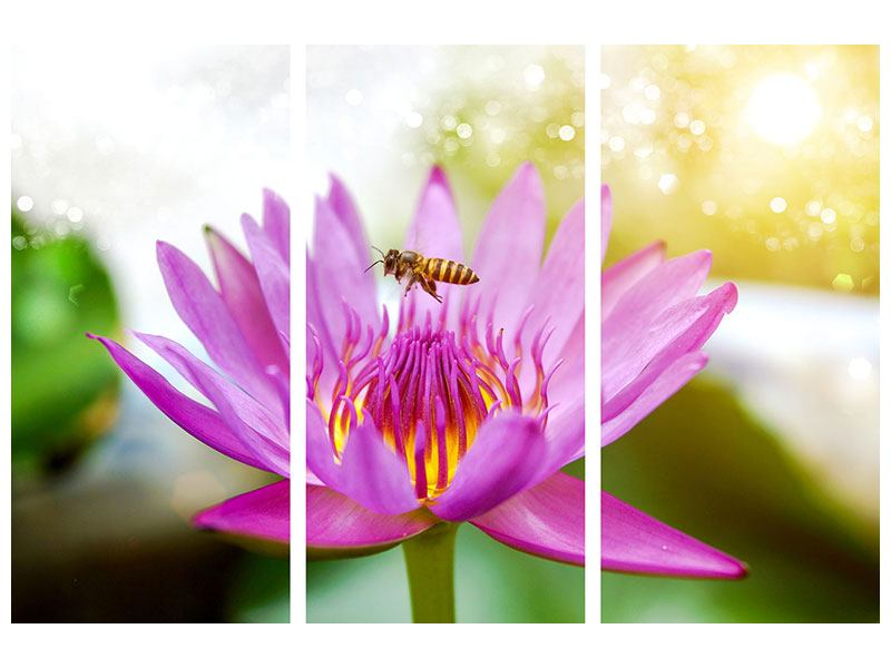 Metallic-Bild 3-teilig Die Lotus mit Biene