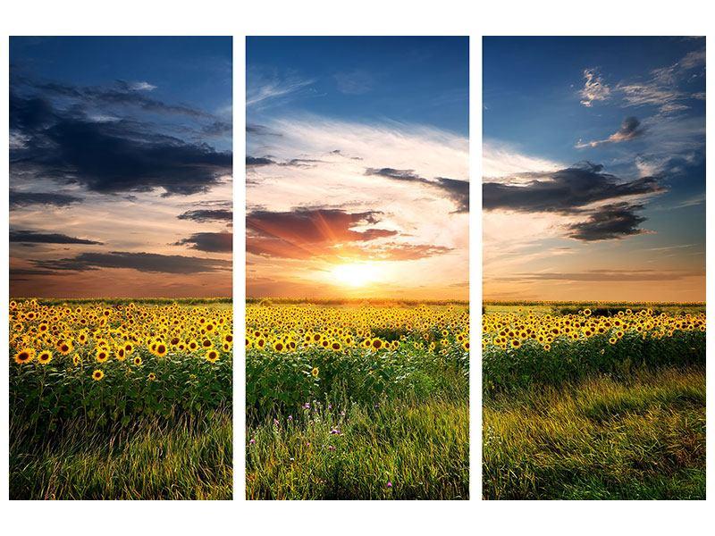 Metallic-Bild 3-teilig Ein Feld von Sonnenblumen