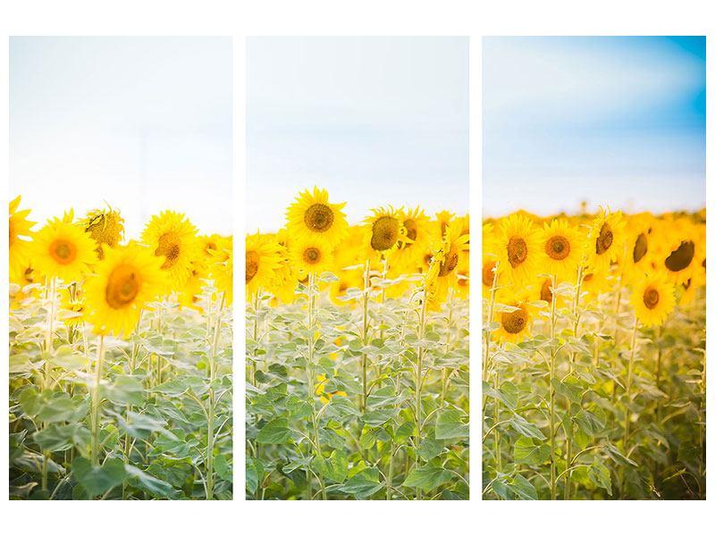 Metallic-Bild 3-teilig Im Sonnenblumenfeld