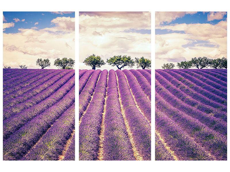 Metallic-Bild 3-teilig Das Lavendelfeld