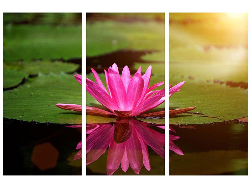 Metallic-Bild 3-teilig Lotus im Wasser