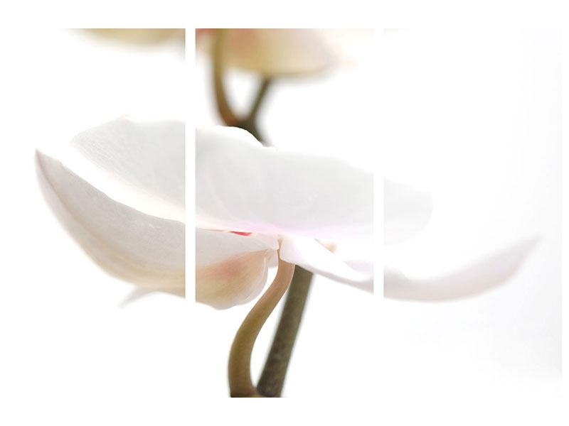 Metallic-Bild 3-teilig XXL Orchideenblüte