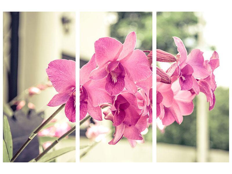 Metallic-Bild 3-teilig Ein Fensterplatz für die Orchideen
