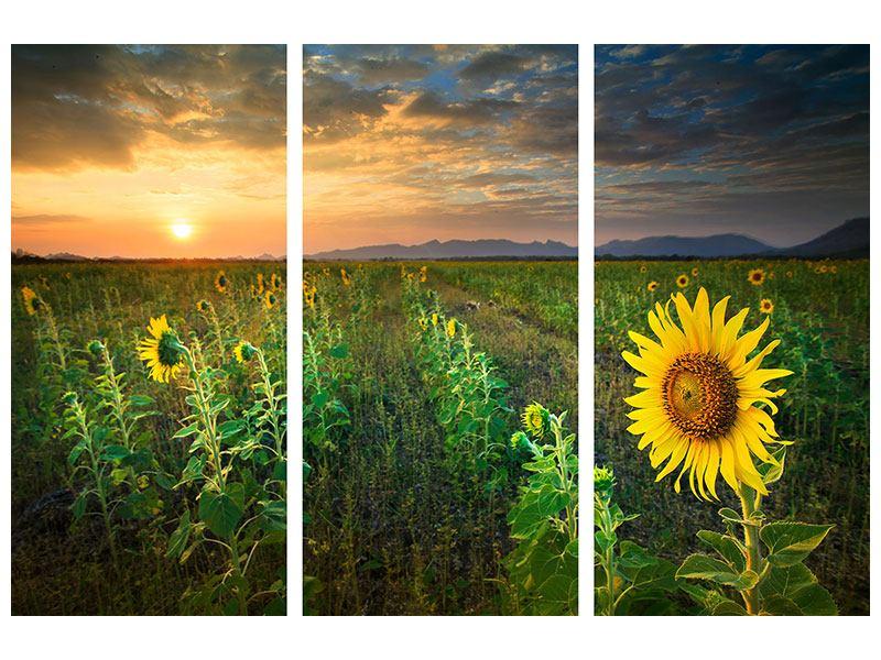 Metallic-Bild 3-teilig Sonnenblumenfeld im Abendrot