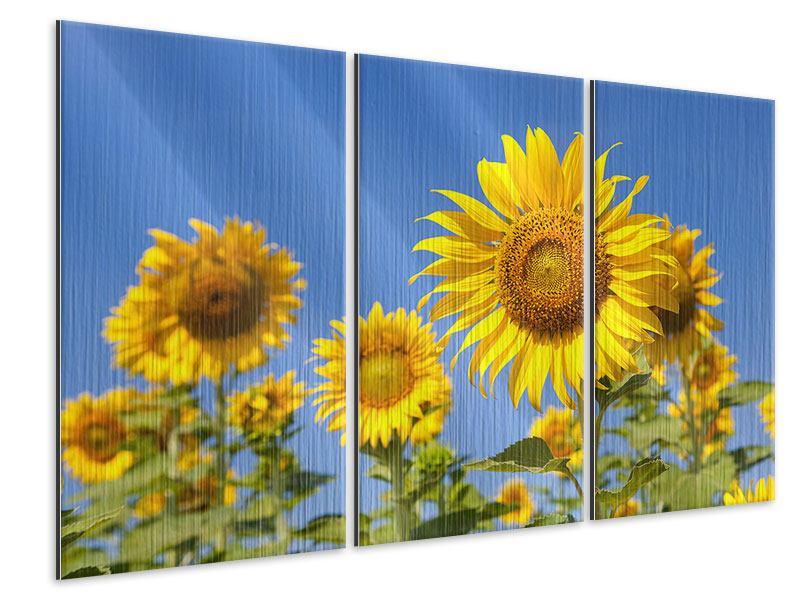 Metallic-Bild 3-teilig Himmlische Sonnenblumen