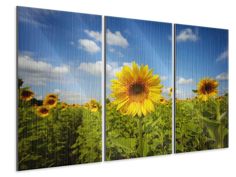 Metallic-Bild 3-teilig Sommer-Sonnenblumen