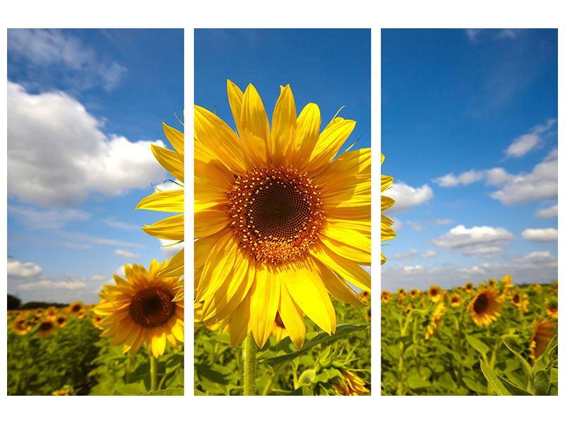 Metallic-Bild 3-teilig Das Feld der Sonnenblumen