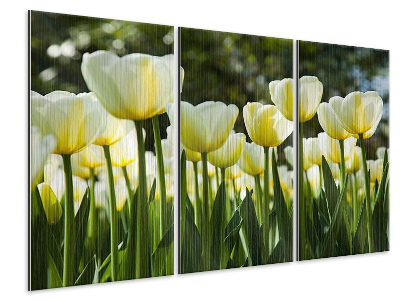 Metallic-Bild 3-teilig Tulpen bei Sonnenuntergang
