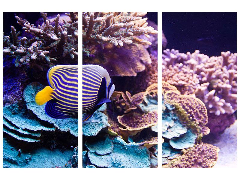 Metallic-Bild 3-teilig Faszination Unterwasser