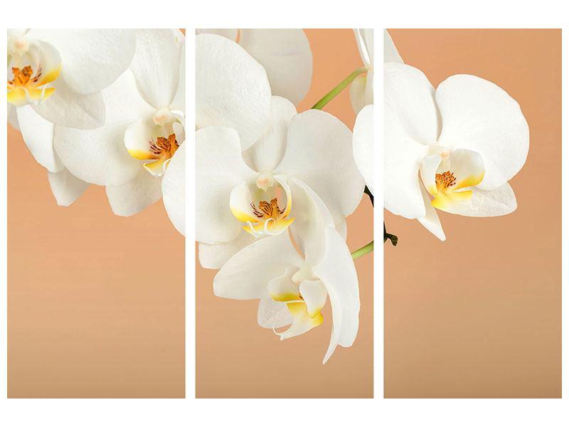 Metallic-Bild 3-teilig Weisse Orchideenblüten