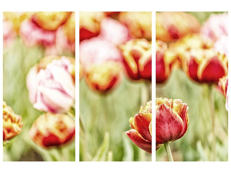 Metallic-Bild 3-teilig Die Schönheit der Tulpe
