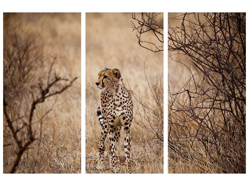 Metallic-Bild 3-teilig Eleganter Gepard