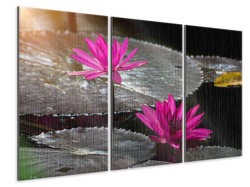 Metallic-Bild 3-teilig Seerosen im Morgentau