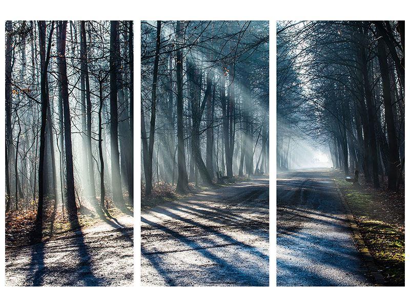 Metallic-Bild 3-teilig Wald im Lichtstrahl