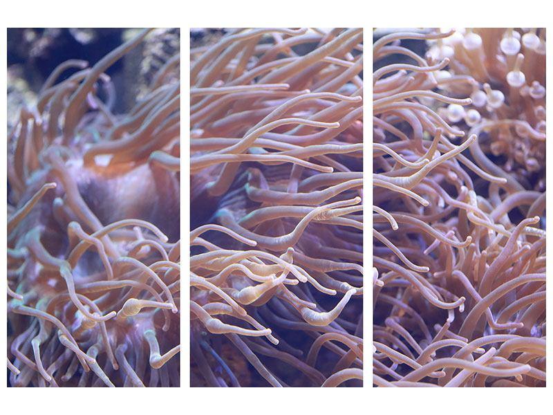 Metallic-Bild 3-teilig Korallenriff