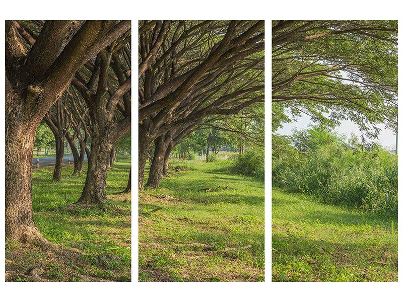 Metallic-Bild 3-teilig Alter Baumbestand